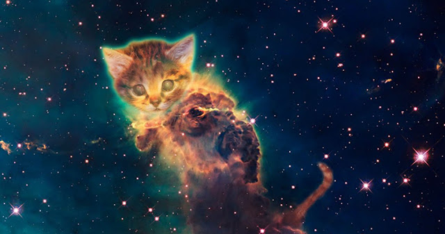Ваша кошка не просто домашне…