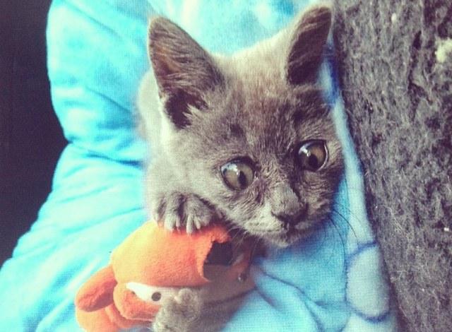 Найденному на улице необычному котенку врачи давали не более 5 месяцев...