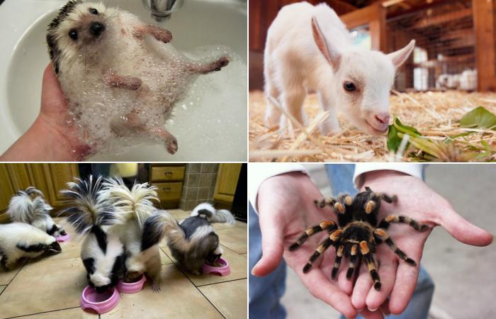 Животные в домашних условиях