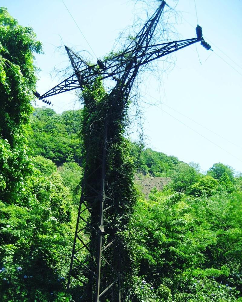 Опора, Абхазия заброшенное, красиво, мир без людей, природа берет свое, фото, цивилизация