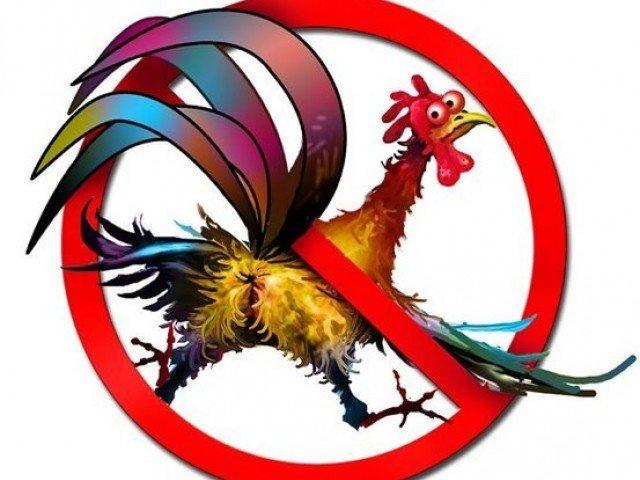 В Румынии собираются запрети…