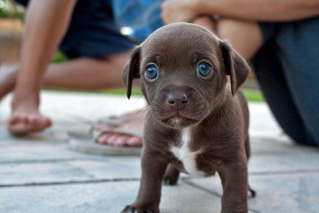 Самые потрясающие щенки в мире