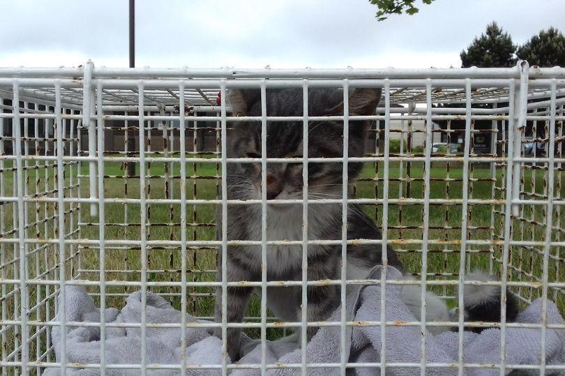 Котёнок три недели плыл в закрытом контейнере до Шотландии, и вот что его там ожидало!