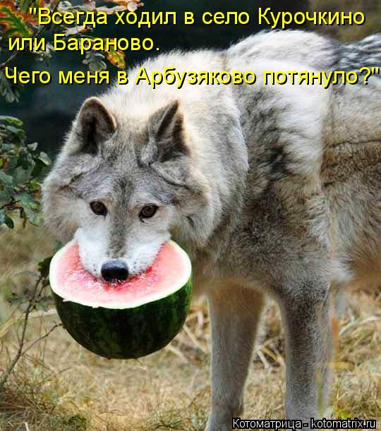 """Котоматрица: """"Всегда ходил в село Курочкино или Бараново.  Чего меня в Арбузяково потянуло?"""""""