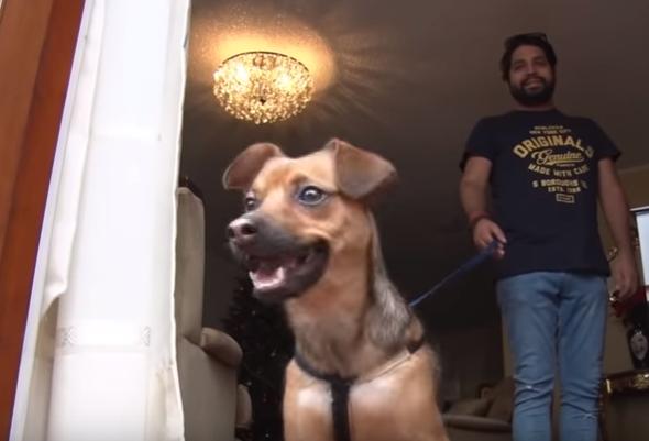 Бусинка под ёлкой: спасённая перуанским болельщиком собака готовится встретить Рождество