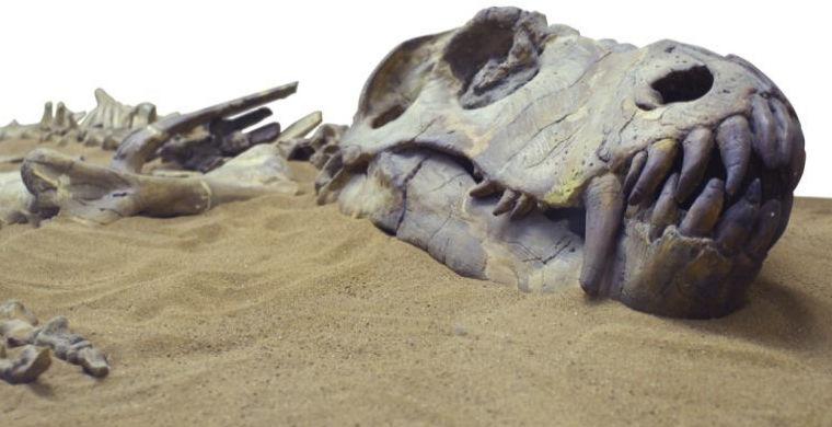 Ученые нашли новый вид крупных динозавров