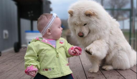 Врач-невропатолог прописал больному ребёнку чау-чау