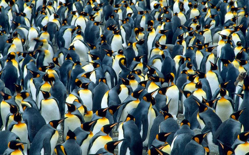 собой ребенка к чему снятся пингвины много на льдинах расписание, маршруты