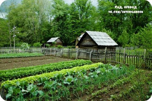 Огород ухаживает сам за собой.