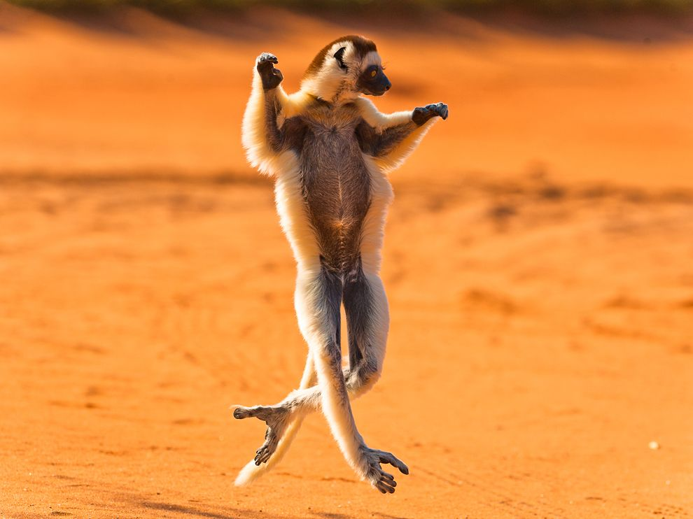 235 Лучшие фото National Geographic за декабрь 2011