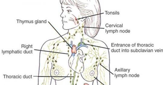 16 признаков того, что пришло время слить лимфатическую жидкость!