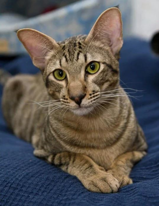 7 странных привычек у кошек, которым есть объяснение Кот, Привычка, Длиннопост