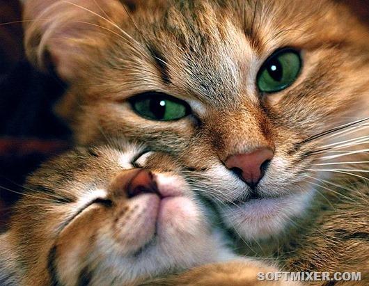Кошки, которые о воспитании …
