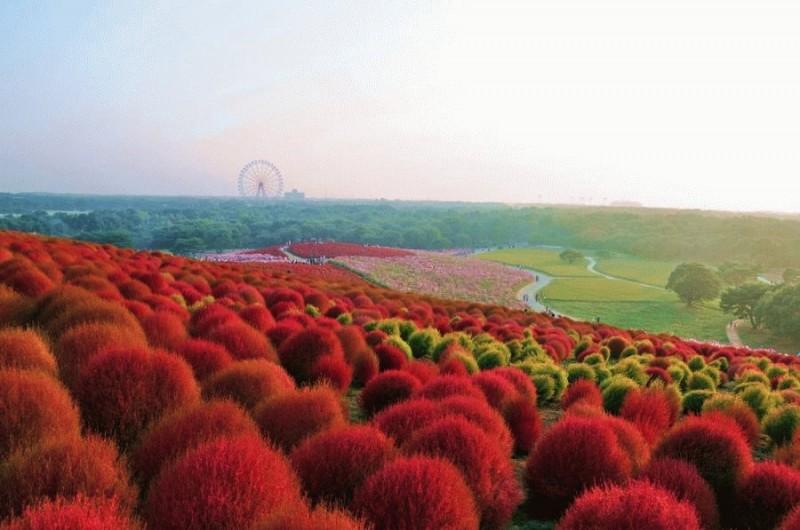 Рассветная страна цветов «Hi…