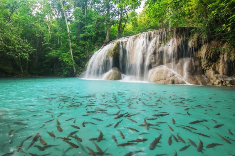Почти на каждом уровне ниспадающим потоком воды образованы небольшие озера, в которых можно купаться. Именно здесь Вы сможете получить сеанс бесплатного фиш массажа, так как в этом водопаде водятся рыбки Garra Rufa. kwai, thailand, паттайя, река квай, тайланд