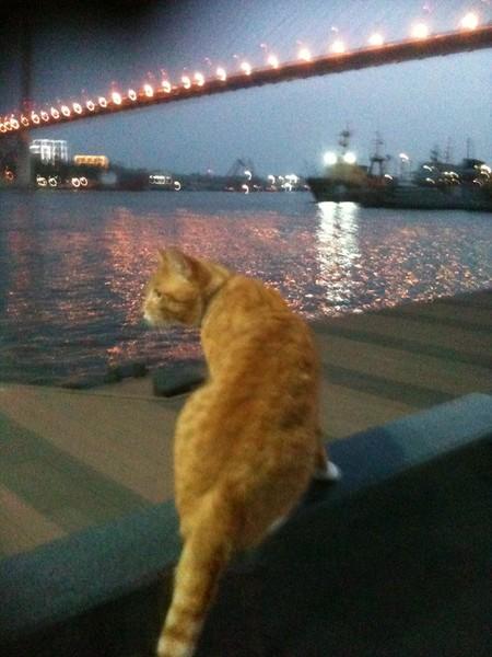 Корабельный кот Фрол (Рыжий шаман)