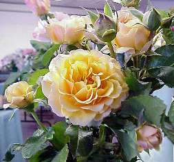 Какой цветок - такой характер