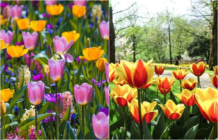 Нежная улыбка весны: 15 ярких фотографий тюльпановых полей, от которых захватывает дух