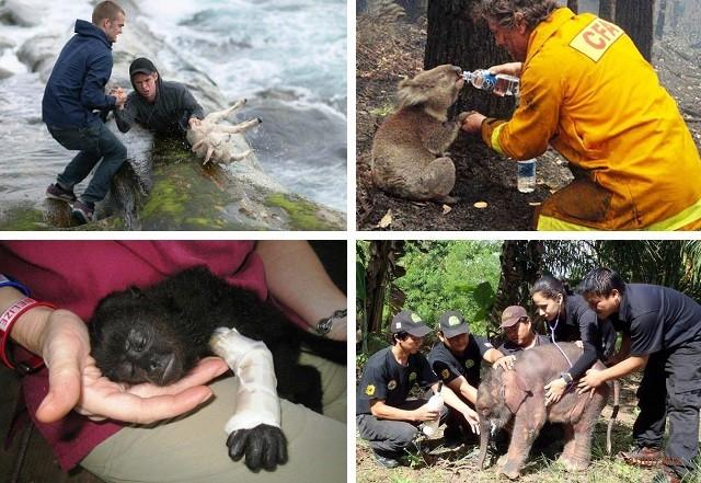 Истории о спасенных животных, которые вернут веру в человечество