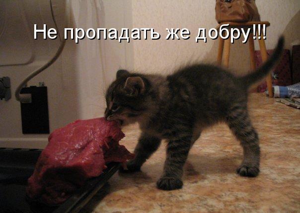 Немного котоматрицы!