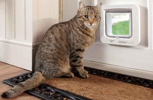 Во Франции кота назвали Брек…
