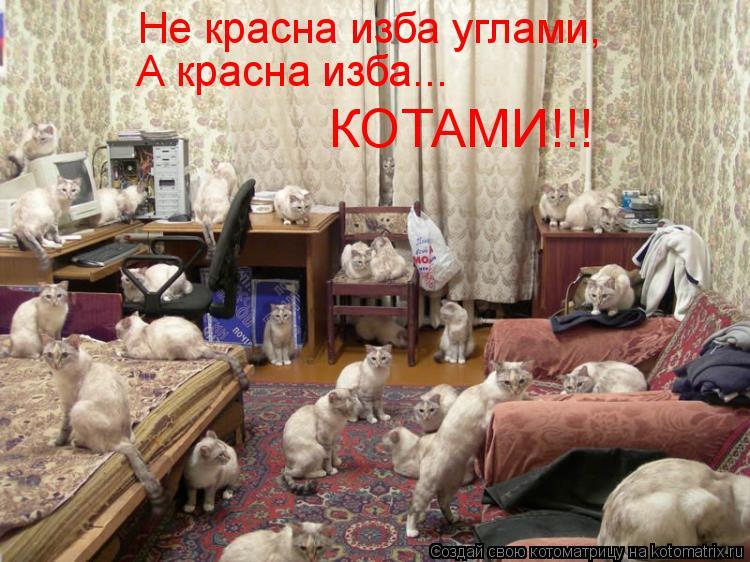 20 смешных кошек, чьи нелепы…