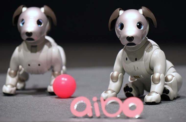 Почему в Японии популярны собаки-роботы