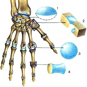 Лечение суставов желатином: миф или реальность - отзывы