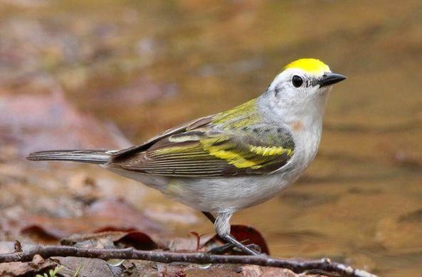 Необычная птица сбила с толку ученых