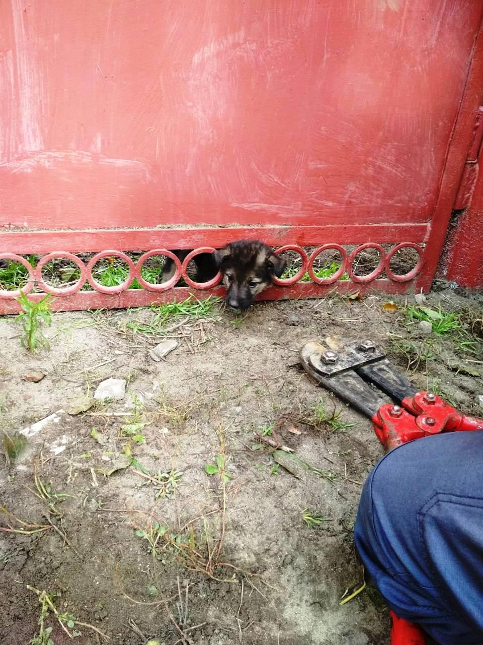 Cпасатели освободили щенка, который застрял в металлической ограде