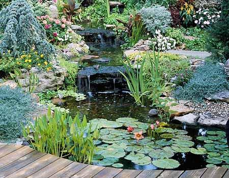 Красивый пруд на даче: правильно выбираем место