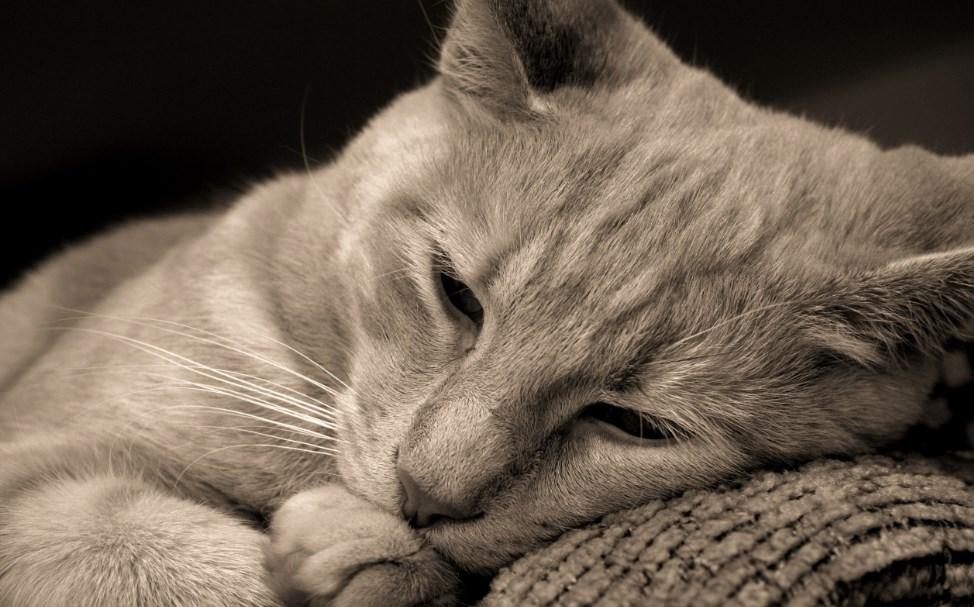 Стихотворение про кота. До слез…