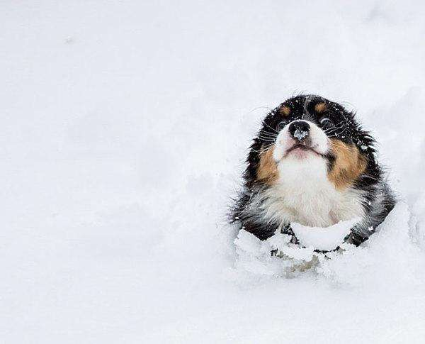 animals-and-first-snow-dog-2__700