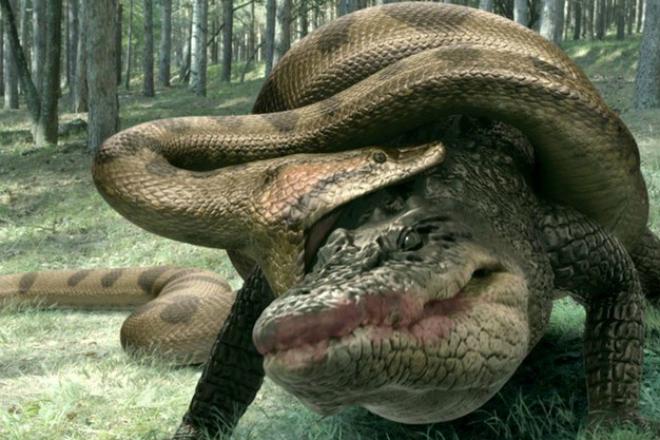 Анаконда против крокодила: схватку чудовищ сняли на видео