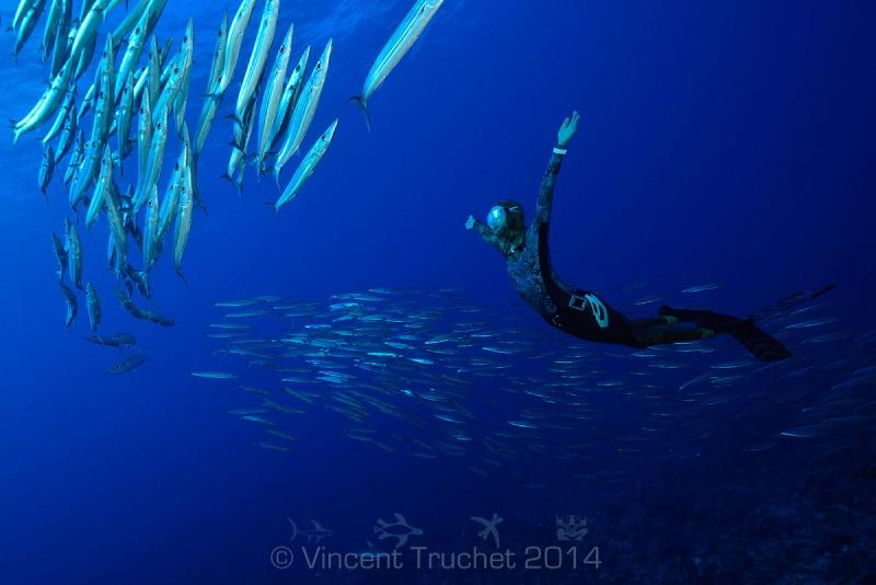 Подводный мир редкие фото