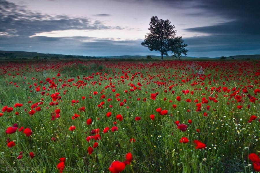 Болгарские пейзажи