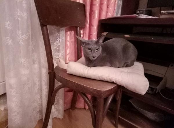 Кошка-испытатель.
