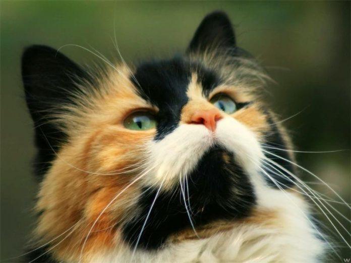 Кошки на самом деле очень понимающие существа
