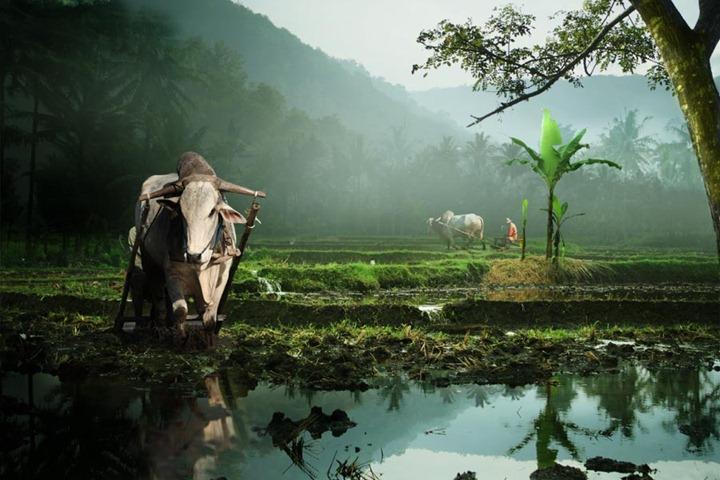 grey Красота Индонезии
