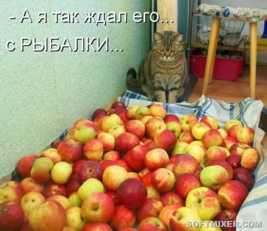 a7497333e72a29fe9fae95da5bd_prev