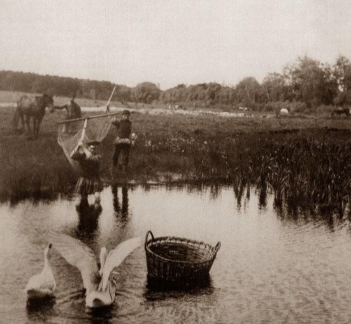 Рыболовство в Олонецкой губернии
