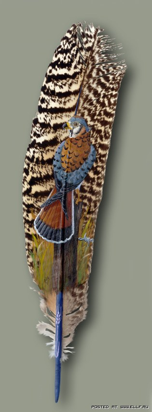Джули Томпсон и ее красочные перья (14 фото)