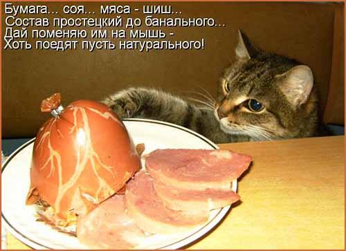 Кулинарные котоматрицы 19