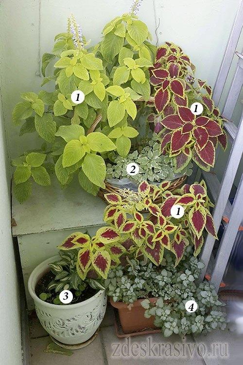 Бюджетное озеленение балкона