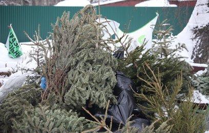 В Москве открылись пункты утилизации елок