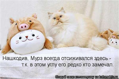 Как мы раздавали котят...