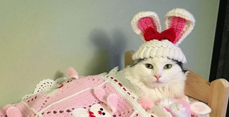 Кошка стала звездой Instagram из-за привычки спать в кукольной кроватке