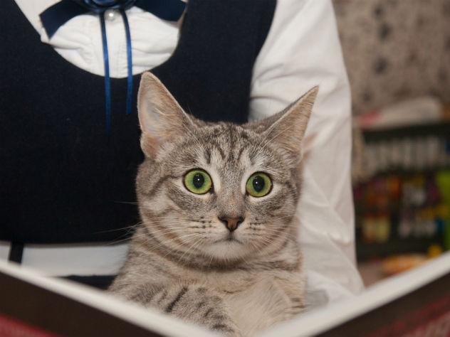Итальянку осудят за то, что она котом свернула шею прохожему