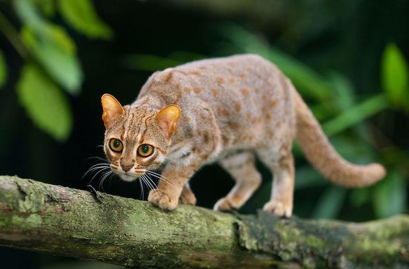 Самый маленький в мире кот спровоцировал бурю нежности в Сети