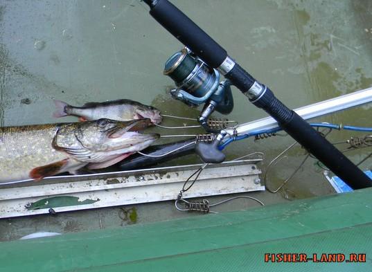 рыбалка на тормоза